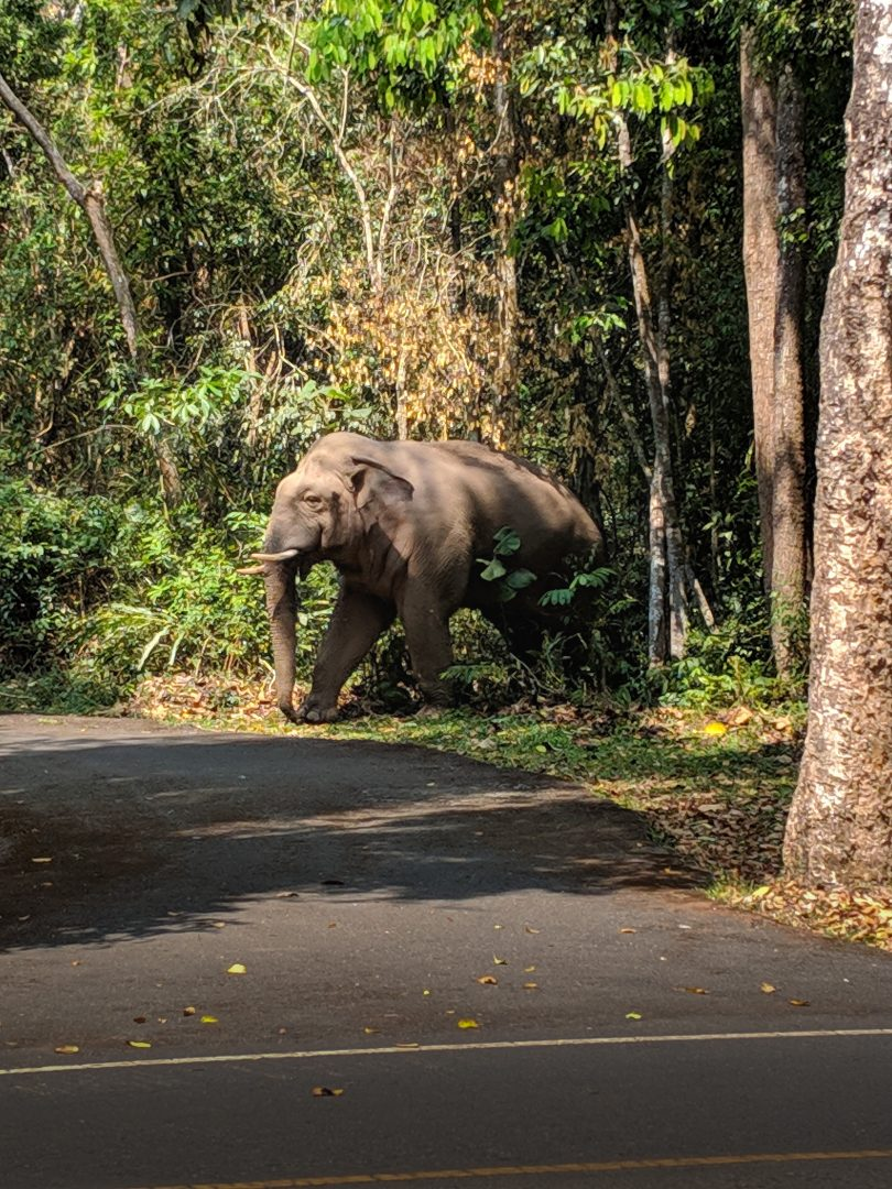 Elephand in Thailand Jungle