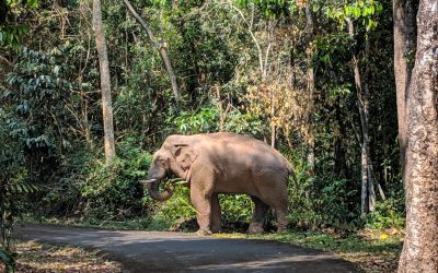 How to Ethically See Elephants in Thailand