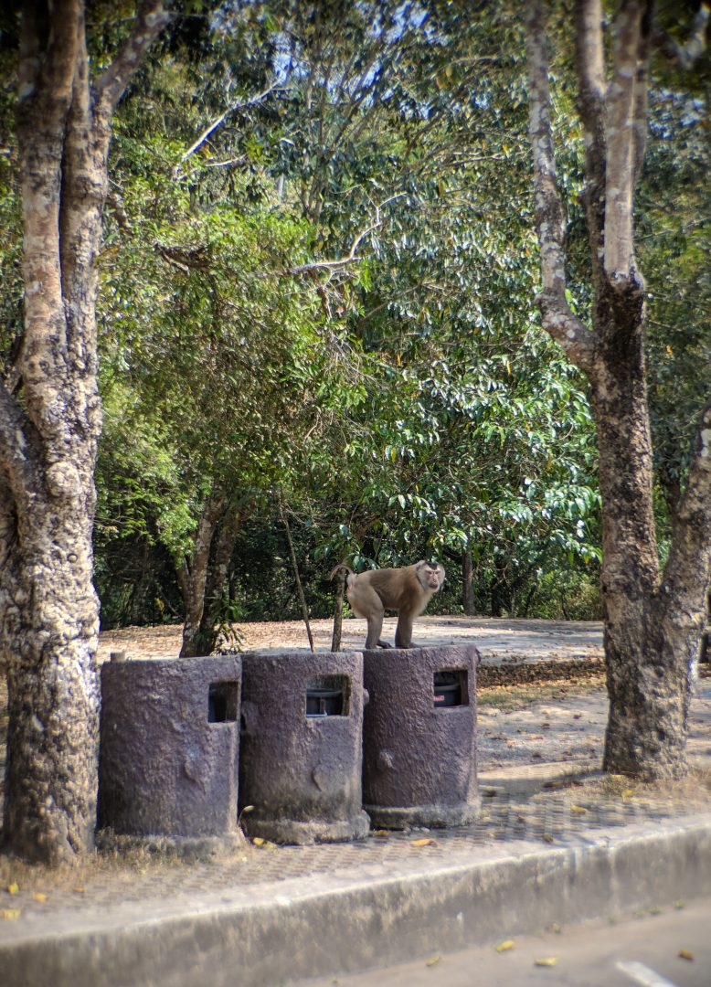 Thailand monkey on garbage cans