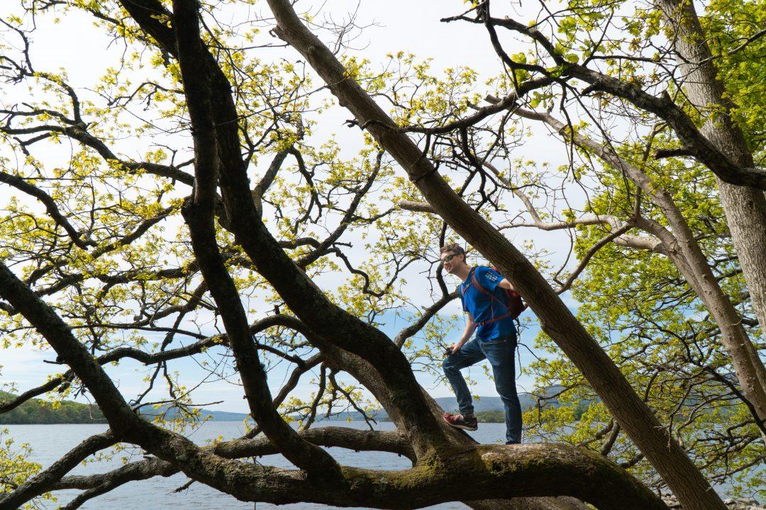 Man climbing a big tree