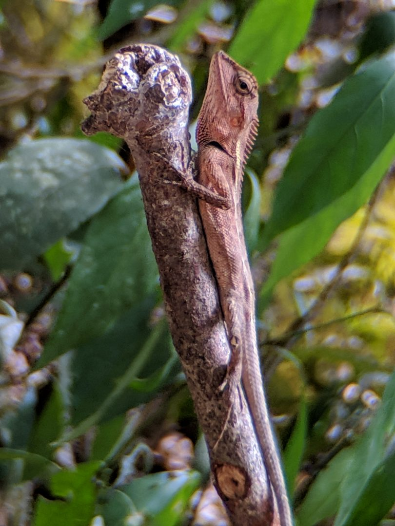 Water lizzard spotted during Thailand Jungle Safari