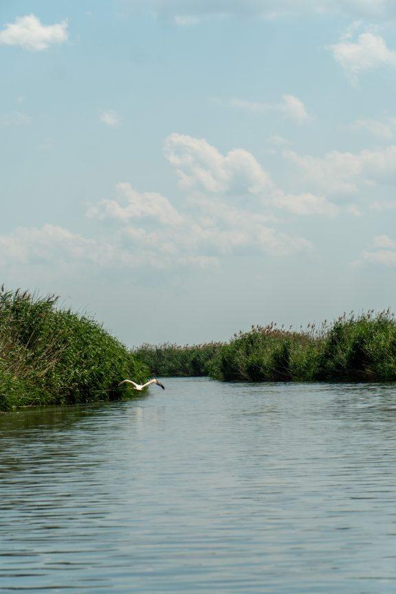 Bird flying over Delta Denarii waterway