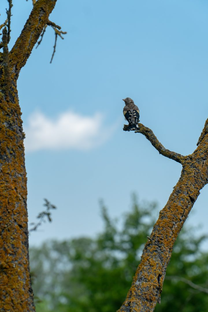 Songbird on tree in Danube Delta