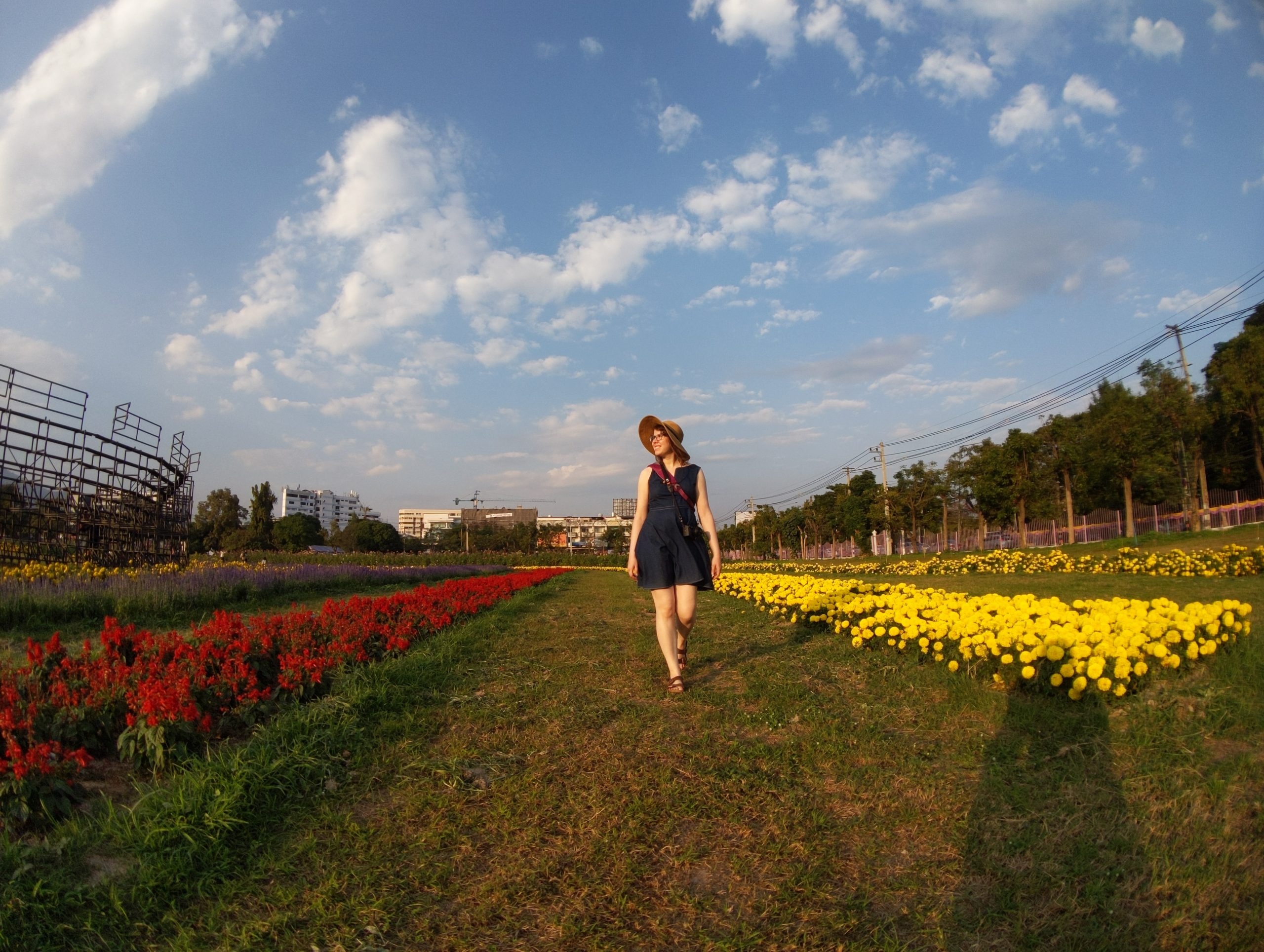 Woman walking in sunshine in field of flowers