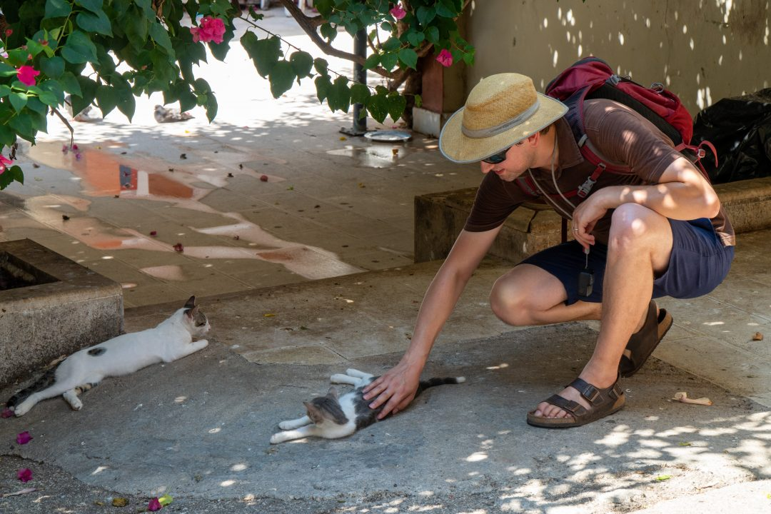 Man petting cats in shade