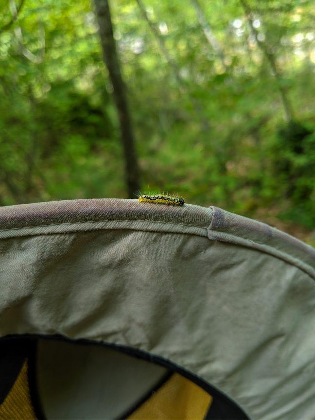 Silk worm on hat.