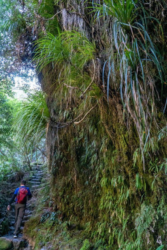 Man walking through New Zealand forest.