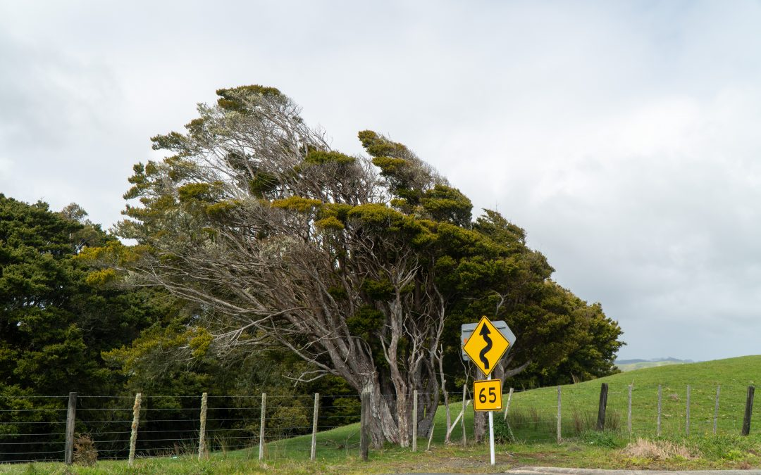 Driving Tips for a New Zealand Road Trip