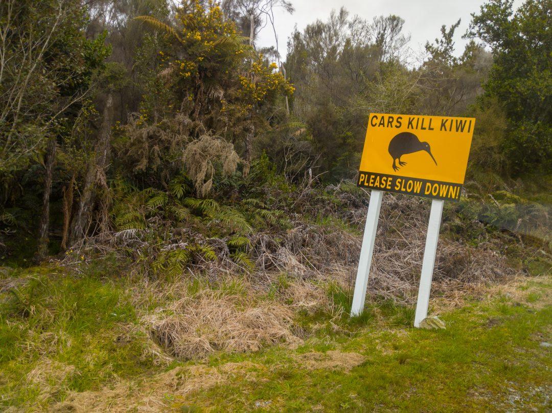 Cars kill Kiwis. Driving tips for New Zealand.