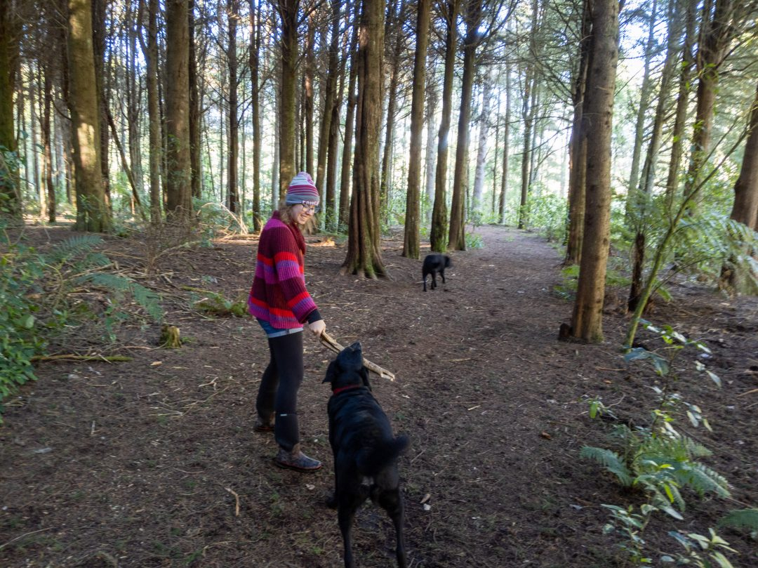 Woman walking dogs in Rotorua Red Wood Forest New Zealand north island.