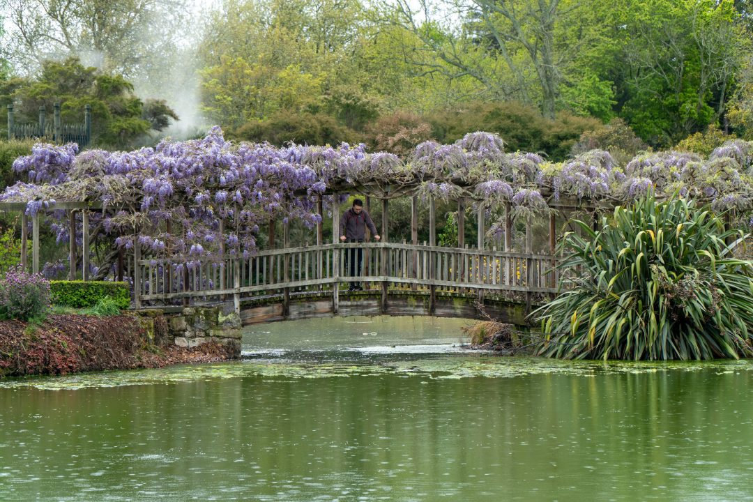 Lavender Bridge Rotorua Park New Zealand.